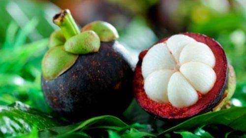 Portal Cool 10 Pcs: 20Pcs Family Clusiaceae Garcinia Mangostana Semillas Evergreen Tree Purple Mangoste